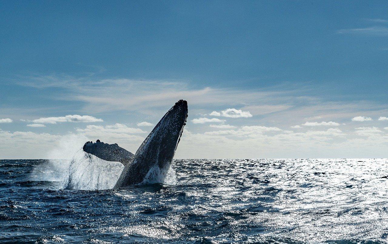 Rencontre surprise avec deux baleines en face du wharf !